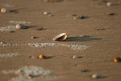 Angespültes Strandgut - p4170005 von Pat Meise