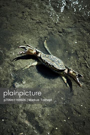 Krabbe - p706m1169926 von Markus Tollhopf