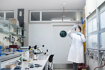 Female chemist looking at petri dishes in laboratory - p300m950686f by Sigrid Gombert