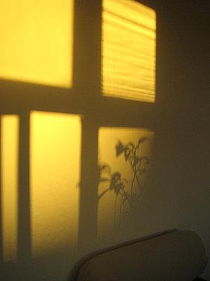 Gelbes Morgenlicht wirft Schattenform an Wand - p627m1035842 von Sophia Paeslack