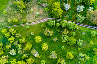 Germany, Baden-Wuerttemberg, Swabian Franconian forest, Rems-Murr-Kreis, Aerial view of meadow with scattered fruit trees and dirt road - p300m1587103 von Stefan Schurr