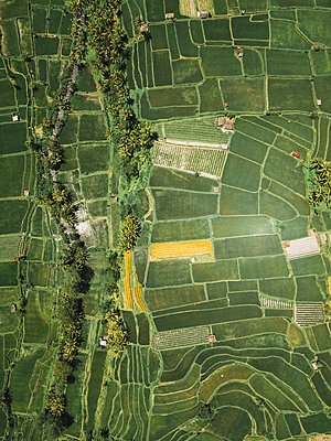 Indonesia, Bali, Aerial view of rice fields from above - p300m2062062 by Konstantin Trubavin
