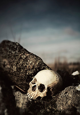 Skull - p984m1123718 by Mark Owen