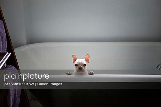 p1166m1099182f von Cavan Images