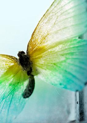Schmetterling - p1248m1045187 von miguel sobreira