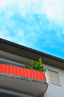Germany, Bavaria,Munich, Low angle view of banana tree potted on red-covered balcony - p300m2197527 by Axel Ganguin