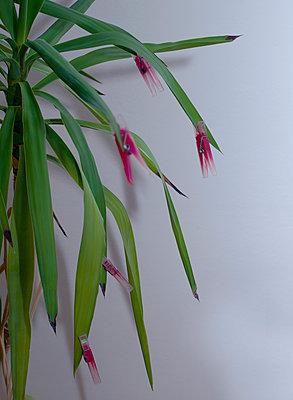 Blüten - p1279m1119401 von Ulrike Piringer