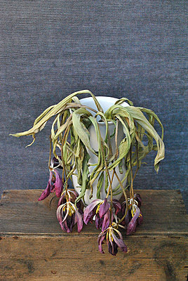 Withered flowers in a vase - p1648m2260196 by KOLETZKI