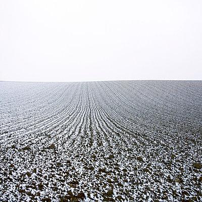 Snowy ploughed field - p8130462 by B.Jaubert