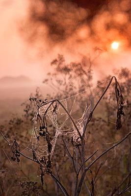 Spinnennetze im Morgennebel - p739m1170270 von Baertels