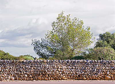 Stone wall and pine tree - p885m890726 by Oliver Brenneisen