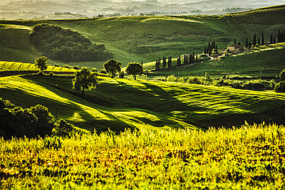 Tuscan hills, San Quirico d'Orcia - p968m987184 by Roberto Pastrovicchio