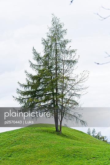 Baum auf dem Hügel - p2570443 von Luks