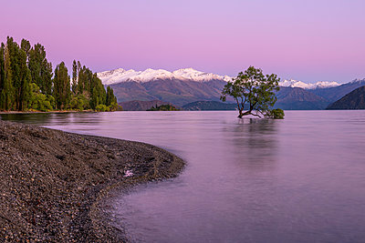 New Zealand, Otago, Lake Wanaka and Wanaka Tree at purple dawn - p300m2199451 by Martin Rügner