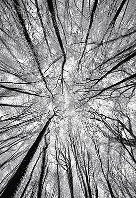Hohe Bäume - p1041m2073401 von Franckaparis
