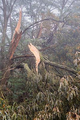 Windbruch - p739m1497438 von Baertels