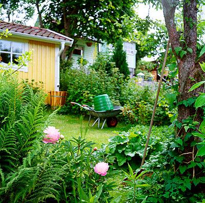 Schubkarre im Garten - p972m1136670 von Trinidad Carrillo