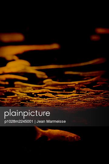 Underwater - p1028m2245001 by Jean Marmeisse