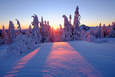 Germany, Bavaria, Bavarian Forest in winter, Great Arber, Arbermandl, snow-capped spruces, sunset - p300m1416663 by Martin Siepmann