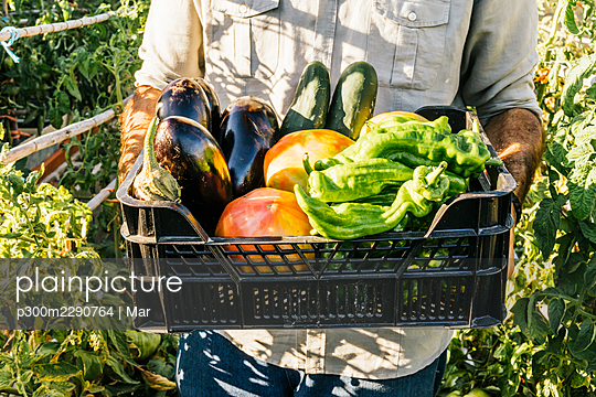 Man carrying crate of fresh vegetables in organic garden - p300m2290764 by Mar