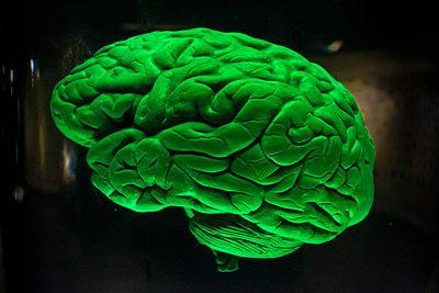 Menschliches Gehirn - p1486m2037621 von LUXart