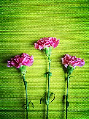 Three carnations - p300m1025281f by Gaby Wojciech