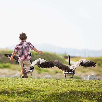 Caucasian boy feeding geese - p555m1453256 by Mike Kemp