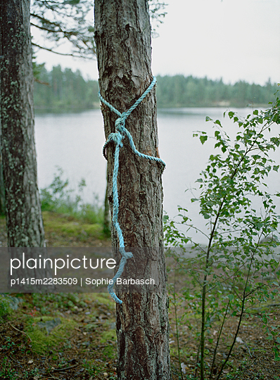 Forest - p1415m2283509 by Sophie Barbasch