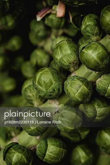 Brussell Sprouts - p1628m2230118 by Lorraine Fitch