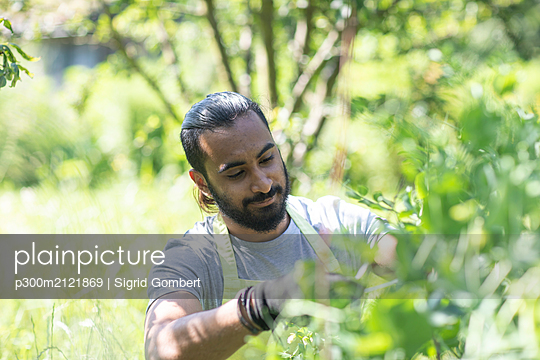 Portrait of bearded young man  pruning plants - p300m2121869 by Sigrid Gombert