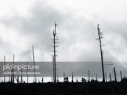 Forest dieback - p4760181 by Ilona Wellmann