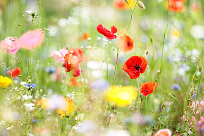 Colourful flowers - p403m731634 by Helge Sauber