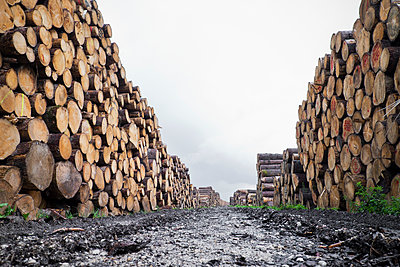 Timber industry - p1149m1492414 by Yvonne Röder