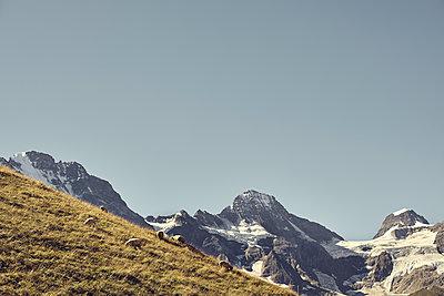 Berner Oberland - p1305m1138639 von Hammerbacher