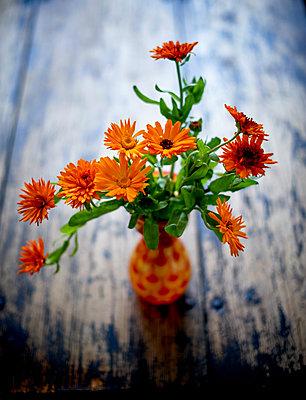 Orange Calendulas - p312m1192850 by Pernilla Hed