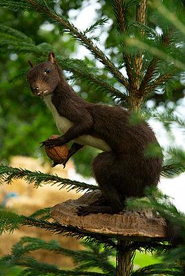 Spruce - p3790205 by Scheller