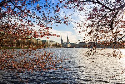 Germany, Hamburg, Inner Alster Lake in spring - p300m926517f by Kristian Peetz