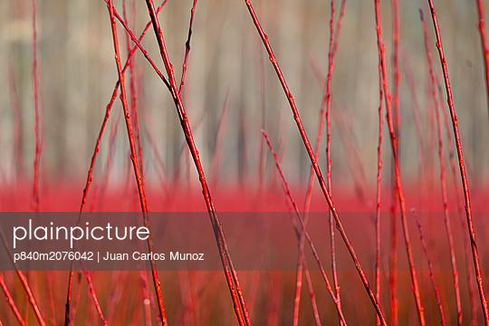 p840m2076042 von Juan Carlos Munoz