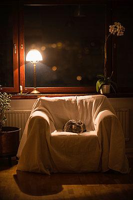 Cat sleeping at night in armchair - p1418m1572333 by Jan Håkan Dahlström