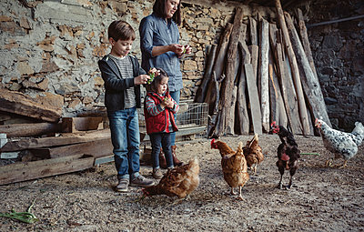Woman and her children feeding hens with green grapes in a farm barnyard - p300m1115113f by David Pereiras