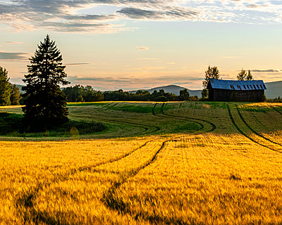 Wheat field - p312m2118643 by Johner