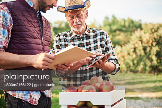 Fruit growers checking quality of harvested apples - p300m2166122 by gpointstudio