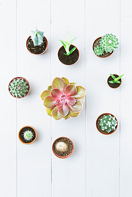Cacti and succulents - p1149m2043385 by Yvonne Röder