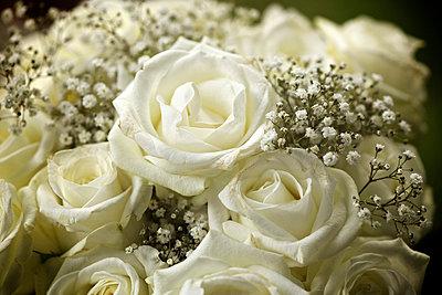 Rose bouquet - p1980243 by David Breun