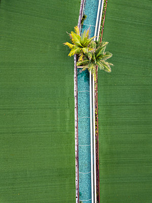 Indonesia, Bali, Aerial view of Keramas, Pool and palms - p300m2070342 by Konstantin Trubavin
