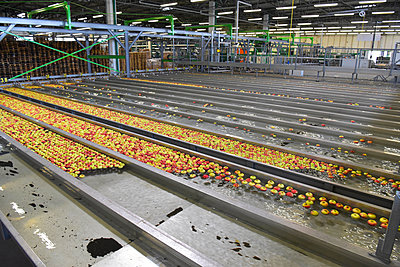 Conveyor belt with apples - p300m2144126 by lyzs