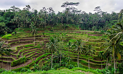 Indonesien - p999m949670 von Monika Kluza
