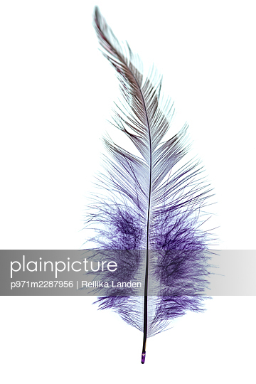 Feather - p971m2287956 by Reilika Landen