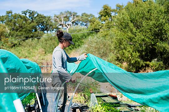 Farmer watering plants in garden - p1166m1182542 by Cavan Images