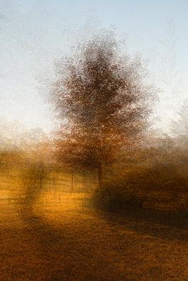 Impressionist Photographic Interpretation of Maple Tree at Sunrise - p1166m2137811 by Cavan Images